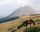 DSC_0045 Konj na Stavni, iza Kom Vasojevicki.jpg
